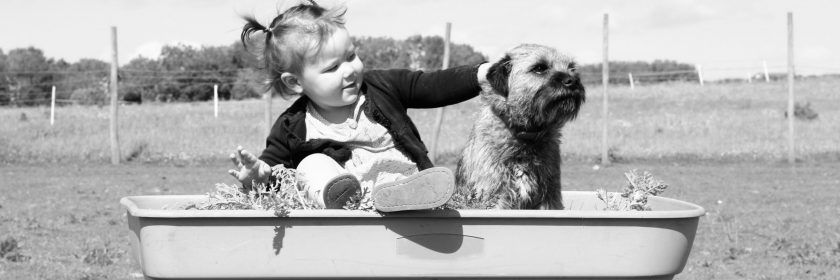 A child pets a dog in a wagon waiting to get moving in Ottawa.